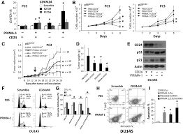 silencing of cd24 enhances the prima 1 u2013induced restoration of