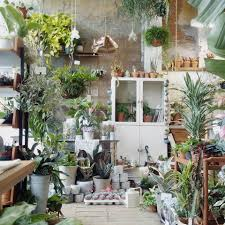 home plants decor shopper u0027s diary conservatory archives in east london gardenista