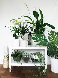 Garden Inside House by Conseils Déco Quelles Plantes Pour U2026mon Salon Plants Trays