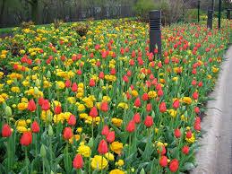 chicago botanic garden sustinea