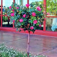 78 best plants images on pinterest garden plants garden ideas