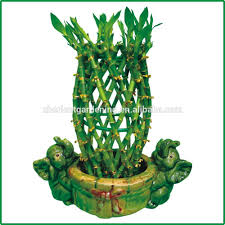 braided lucky bamboo plant braided lucky bamboo plant suppliers