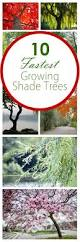 backyard shade trees home outdoor decoration