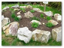 Rock Vegetable Garden How To Grow Rosemary In Your Garden