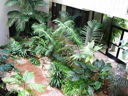 homelife top 15 indoor plants classy 60 tropical house plants types decorating design of 105