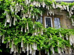 Hanging Flowers Hanging Flowers By Txamy09 On Deviantart