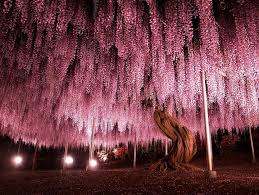 17 of the prettiest trees on earth