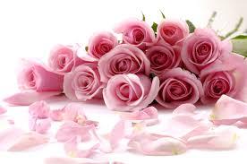 Rose Petals Pink Rose Petals Wallpapers Awesome 46 Pink Rose Petals