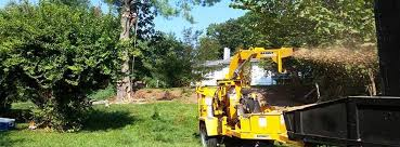 d c tree service home