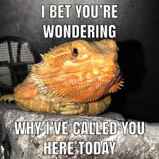 Lizard Meme - resolution lizard meme steemit
