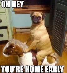 Funny Meme Dog - funny dog memes awesome dog photos pinterest dog memes memes