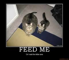 Diabetes Cat Meme - medical and surgical articles afford a vet animal clinic