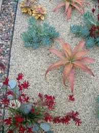 Drought Tolerant Backyard Ideas 25 Unique Drought Tolerant Landscape Ideas On Pinterest Water