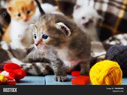 kittens and mittens grey white and ginger newborn kittens in a