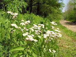 kentucky native plants 12 stunning kentucky places to see wildflowers this spring