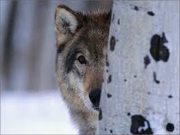 Colorado wildlife images Western colorado wildlife habitat association jpg