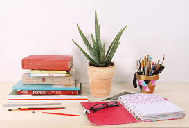 best plant for desk top plants for college students costa farms