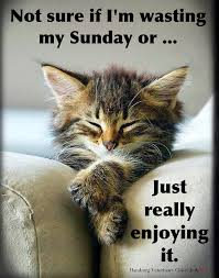 sunday humor relaxing doing nothing enjoying life cute cat