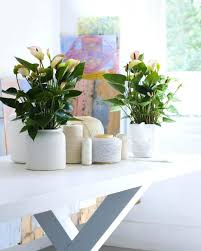 articles with office indoor plants tag office indoor plants