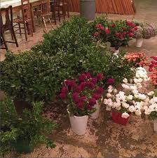 wedding flowers bulk diying your wedding flowers save with sam s club