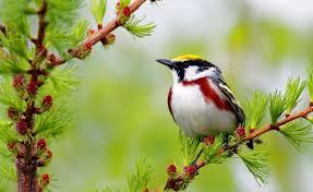 bird on branch hd desktop wallpaper widescreen high definition
