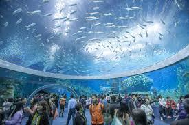 Home Aquarium by Fish Tank Biggest Aquarium In The World Largest Usabiggest Home