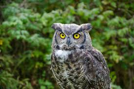 10 fascinating facts about owls