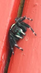 117 best spiders that amaze images on pinterest spider webs