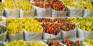 whole sale flowers theafterhoursflowers new york wholesale flower markets
