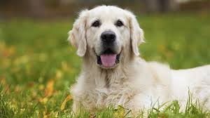 Pet How Long Is Too Long To Leave Your Dog Alone Pet Talk Article