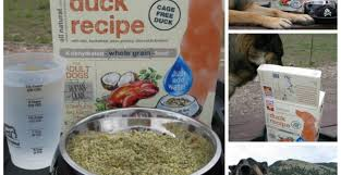 Honest Kitchen Dog Food Reviews by Fabulous Honest Kitchen Love Dog Food Reviews Tags Honest