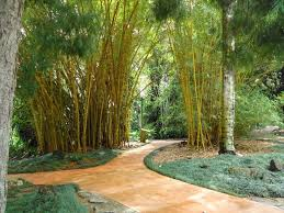 Oahu Botanical Garden by 69 Best Aloha Things To Do See In Hawaii Images On Pinterest