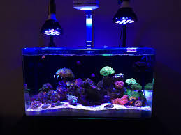 reef tank lighting schedule ai prime settings informational only please no discussion lighting