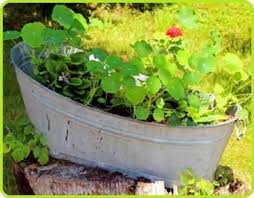 container gardening vegetables and herbs plant varieties to grow