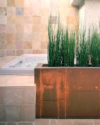 Plants To Keep In Bathroom The Best Bathroom Plants For Your Interior