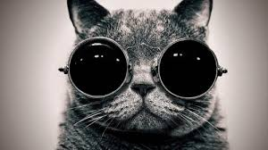 Hipster Cat Meme - create meme cat cat hipster cat cat glasses pictures