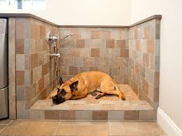 custom walk in showers dog shower custom walk in showers laundry room traditional with