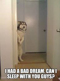 I Had A Dream Meme - i had a bad dream can i sleep with you guys funny scared meme