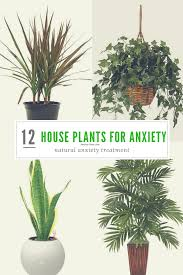 benefits of houseplants 12 most powerful house plants for anxiety and stress anxiety gone