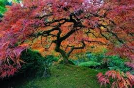 tree symbolism tree symbolism and meanings symbols interpretations