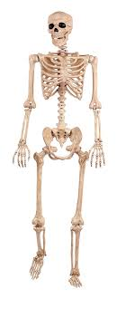 poseable skeleton bonez pose n stay skeleton toys