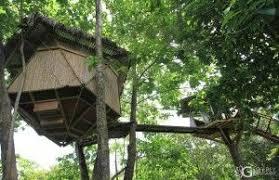 lapa u0027s nest treehouse costa rica treehouse rental vacation
