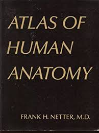 Netter Atlas Of Human Anatomy Pdf Download By Frank H Netter Atlas Of Human Anatomy 2nd Second Edition