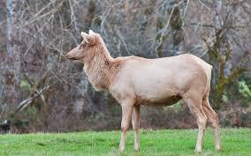 37 animals unique color mutations