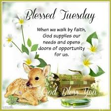best 25 happy tuesday quotes ideas on happy tuesday