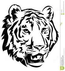 tiger stock vector illustration of white clip black 41330276