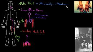 overview of neuron structure video khan academy