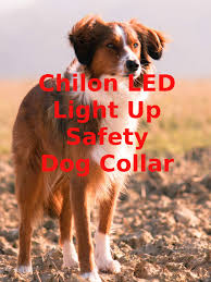 light up collar amazon watch review chilon led light up safety dog collar on amazon