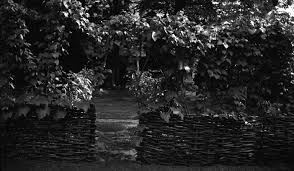 black and white negative view of the garden through foliage on a