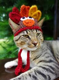 thanksgiving pet photos turkey cat hat turkey cat costume the thanksgiving turkey